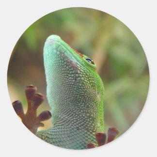 ¡Gecko - para los amantes de lagartos! Pegatinas Redondas