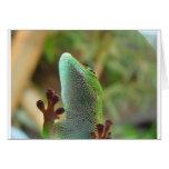 ¡Gecko - para los amantes de lagartos! Tarjetas