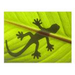 Gecko Postales