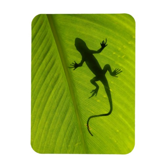 Gecko Silhouette Magnet