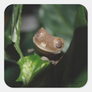 Gecko sonriente calcomanias cuadradas