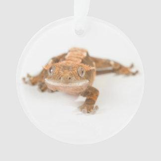 Gecko Stare