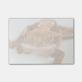 Gecko Stare Post-it® Notes