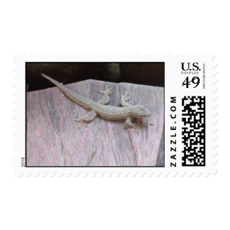 Gecko Territory Postage Stamp