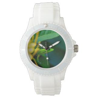 Gecko tropical reloj