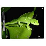 Gecko verde de Auckland Tablero Blanco