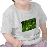 Gecko verde de la tierra del norte camiseta