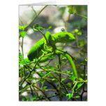 Gecko verde de la tierra del norte felicitaciones