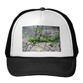 Gecko verde de la tierra del norte gorra