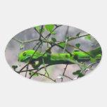 Gecko verde de la tierra del norte pegatina ovalada