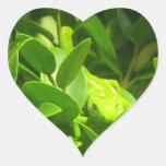 Gecko verde de la tierra del norte pegatina en forma de corazón