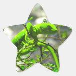 Gecko verde de la tierra del norte pegatina en forma de estrella