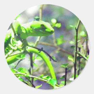 Gecko verde de la tierra del norte pegatina redonda
