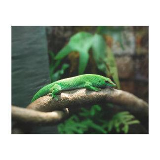 Gecko verde en árbol impresión en lienzo estirada