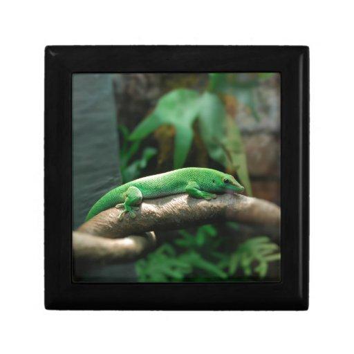 Gecko verde en árbol joyero cuadrado pequeño
