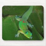 Gecko verde en Hawaii Tapete De Ratón
