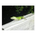 Gecko verde salvaje postal