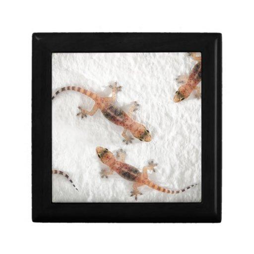 Geckos Keepsake Boxes