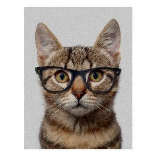 Geek Cat Postcard