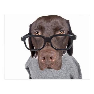 Geeky Dawg Postcard