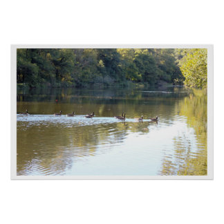 Geese Along Creek Poster