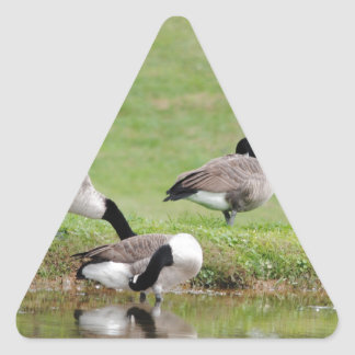 Geese at play triangle sticker