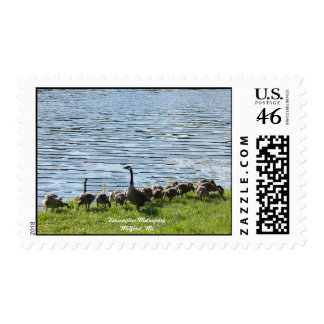 Geese by the Lake Postage Stamp MEDIUM