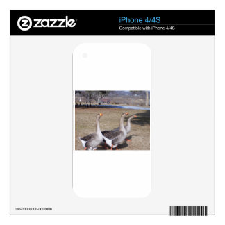 Geese by the Pond Skins For The iPhone 4S