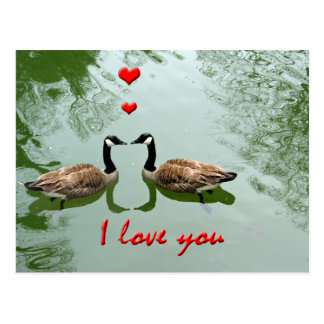 Geese Couple in Love - 'I Love You' Hearts Postcard