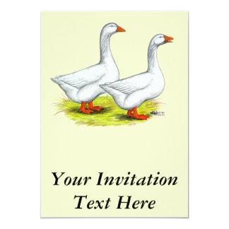 Geese:  Embden Pair Card