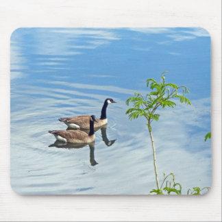 Geese Enjoying a Swim Mouse Pad
