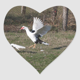 Geese fighting heart sticker
