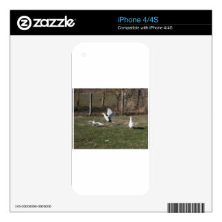 Geese fighting iPhone 4S skins