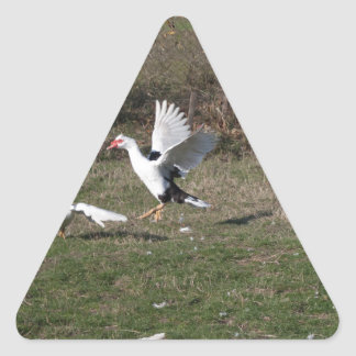 Geese fighting triangle sticker