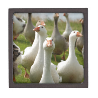 Geese Gift Box