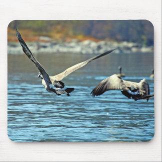 Geese in Flight Mousepads