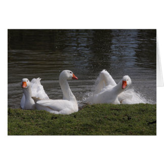 Geese in the Duckpond Card