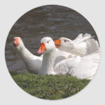 Geese in the Duckpond Classic Round Sticker