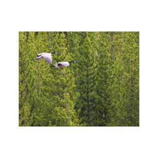Geese in Yellowstone Canvas