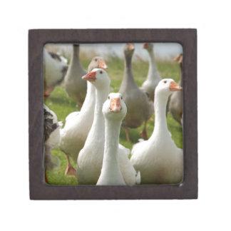 Geese Jewelry Box