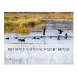 Geese on an Autumn Morning Postcard