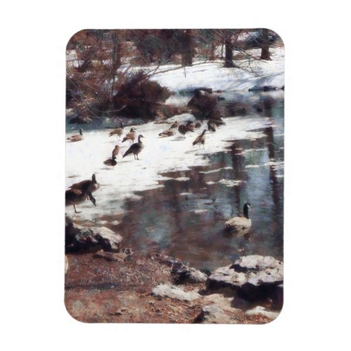 Geese on an Icy Pond Rectangular Photo Magnet
