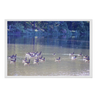 Geese on Creek Photo Poster