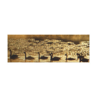 Geese on Golden Pond Canvas Wrapped Stretched Canvas Prints