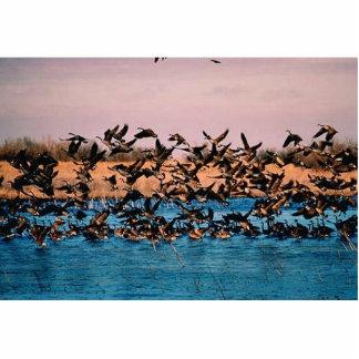 Geese on Owen's Bay, Wetlands Photo Sculptures