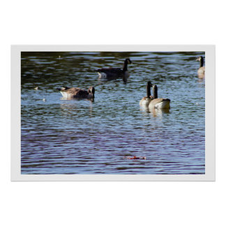 Geese on the Creek Poster