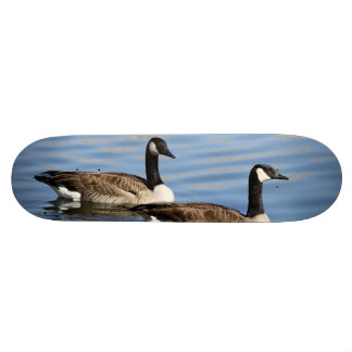 Geese on water skate boards
