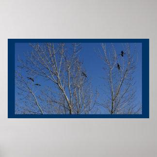 Geese over El Dorado Lake Posters
