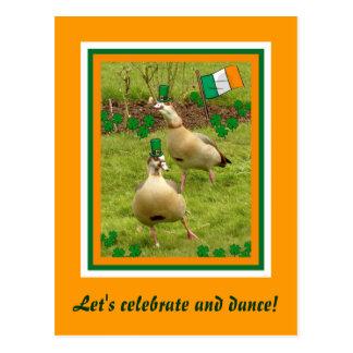 Geese perform a little Irish dancing Postcard