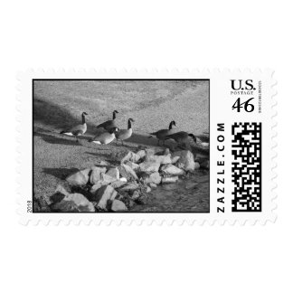 Geese stamps